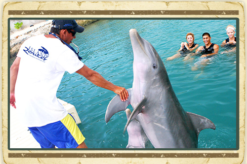 Dolphin Trainer for the Day